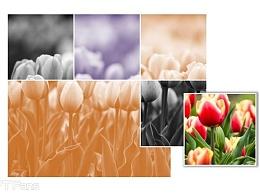 PPT教程(95):三步教你玩出万变图片阵列图