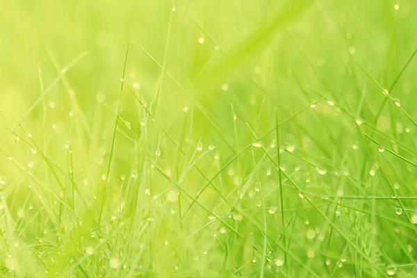 嫩绿的小草PowerPoint背景图片