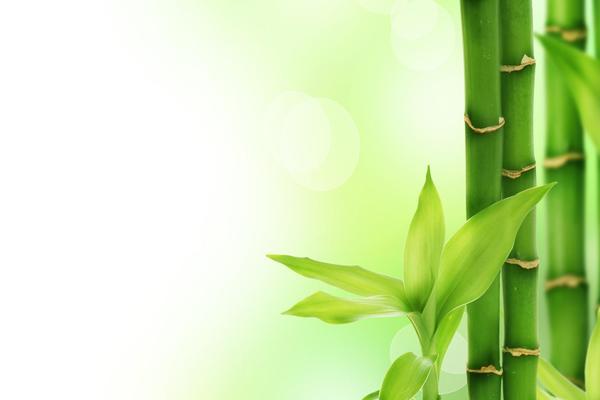 绿色清新竹子幻灯片背景图片