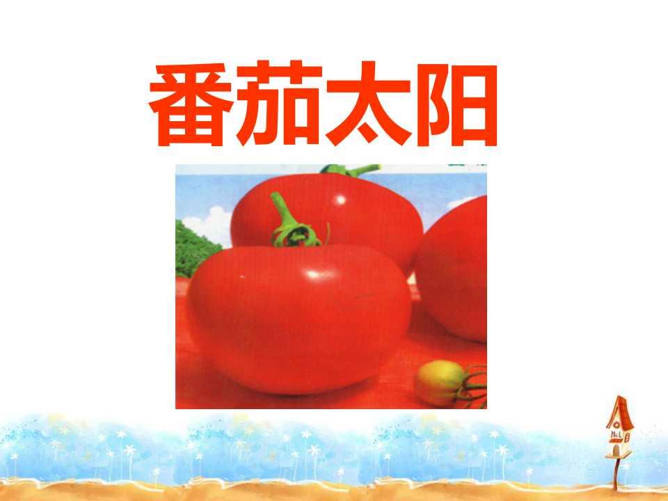 《番茄太阳》PPT课件2
