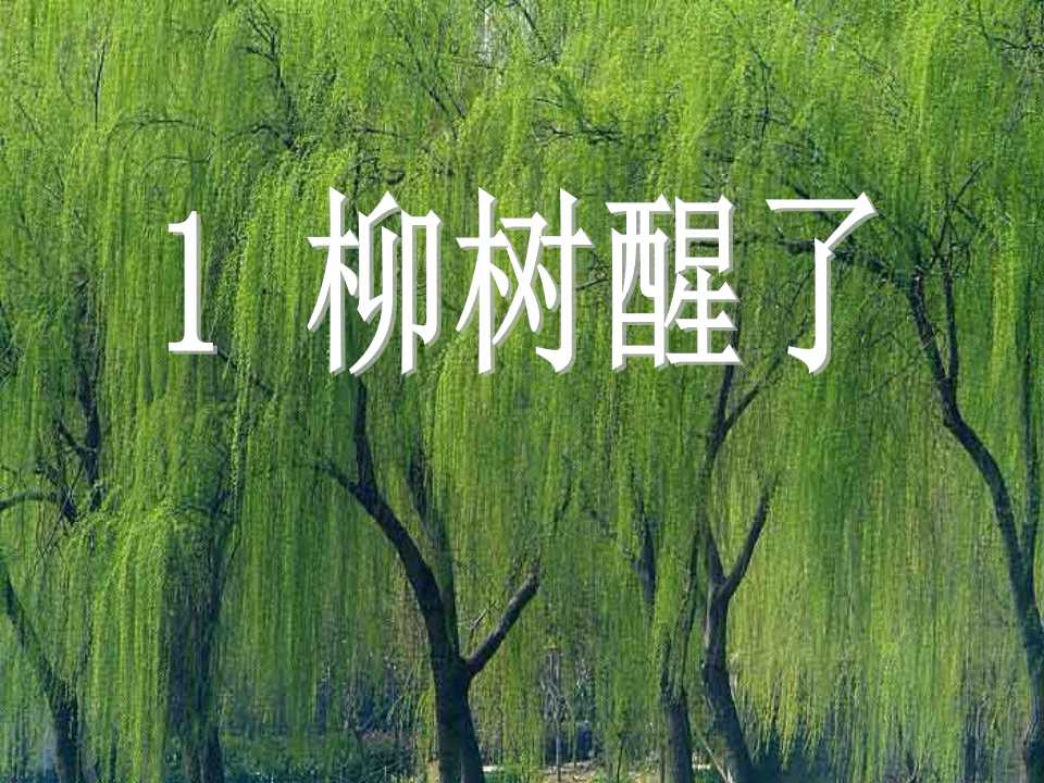 《柳树醒了》PPT课件6