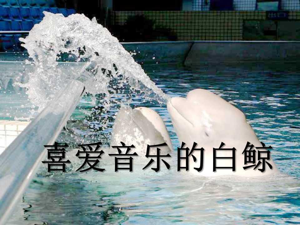《喜爱音乐的白鲸》PPT课件5