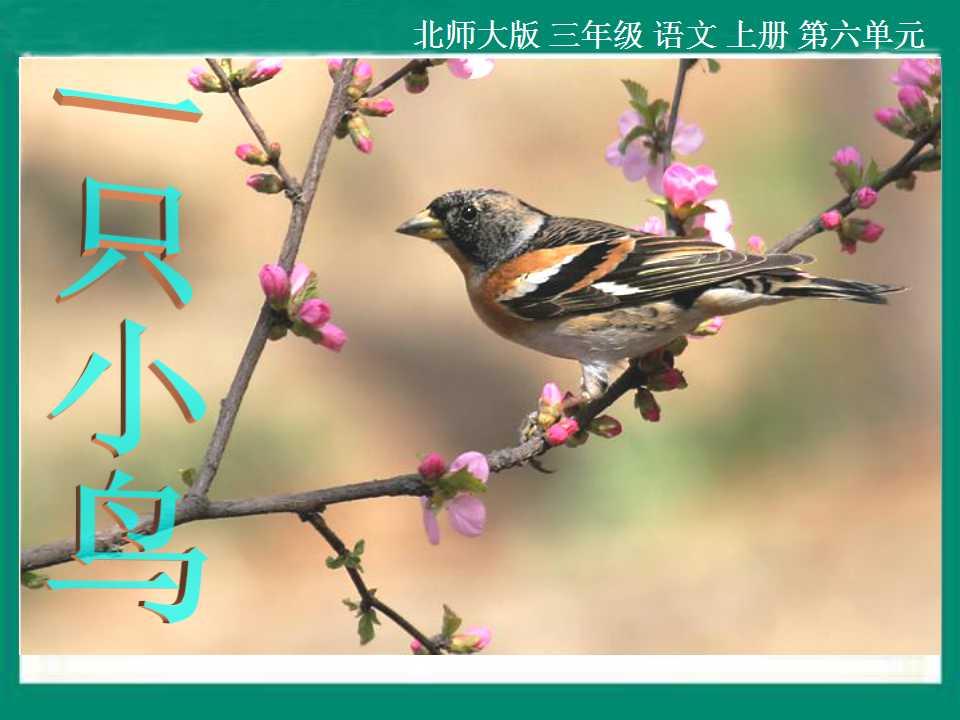 《一只小鸟》PPT课件2