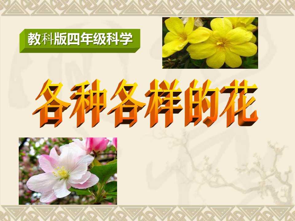 《各种各样的花》新的生命PPT课件