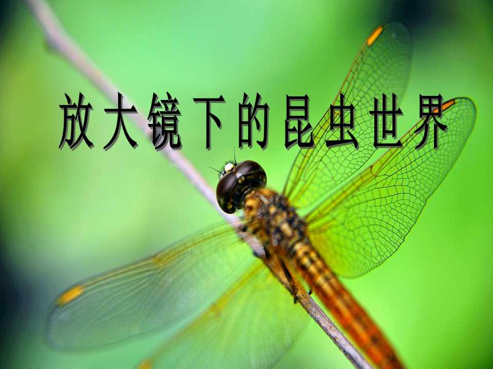 《放大镜下的昆虫世界》微小世界PPT课件2