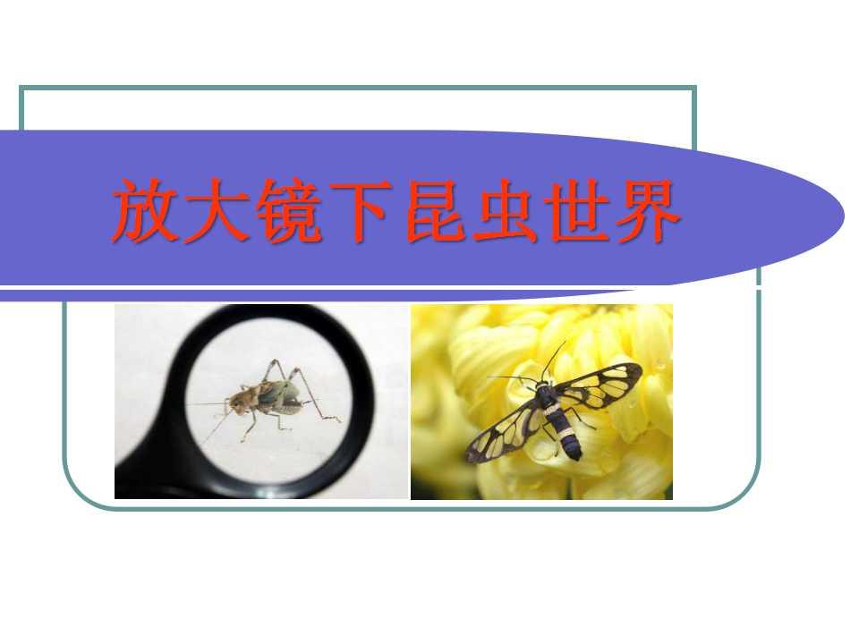 《放大镜下的昆虫世界》微小世界PPT课件4
