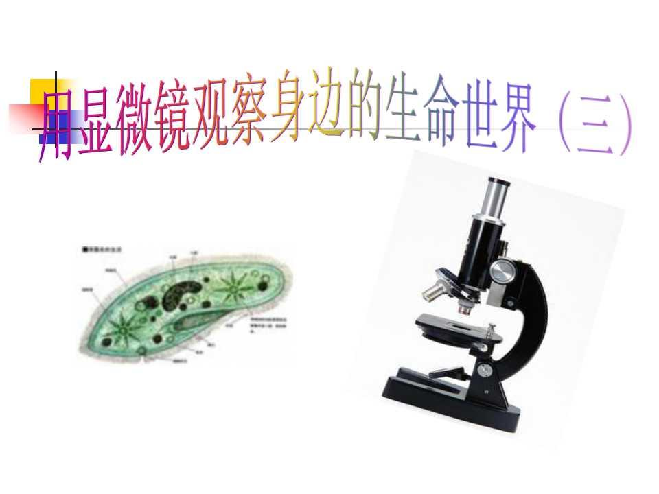 《用显微镜观察身边的生命世界(三)》微小世界PPT课件