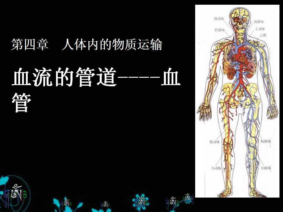 《血流的管道-血管》人体内物质的运输PPT课件5