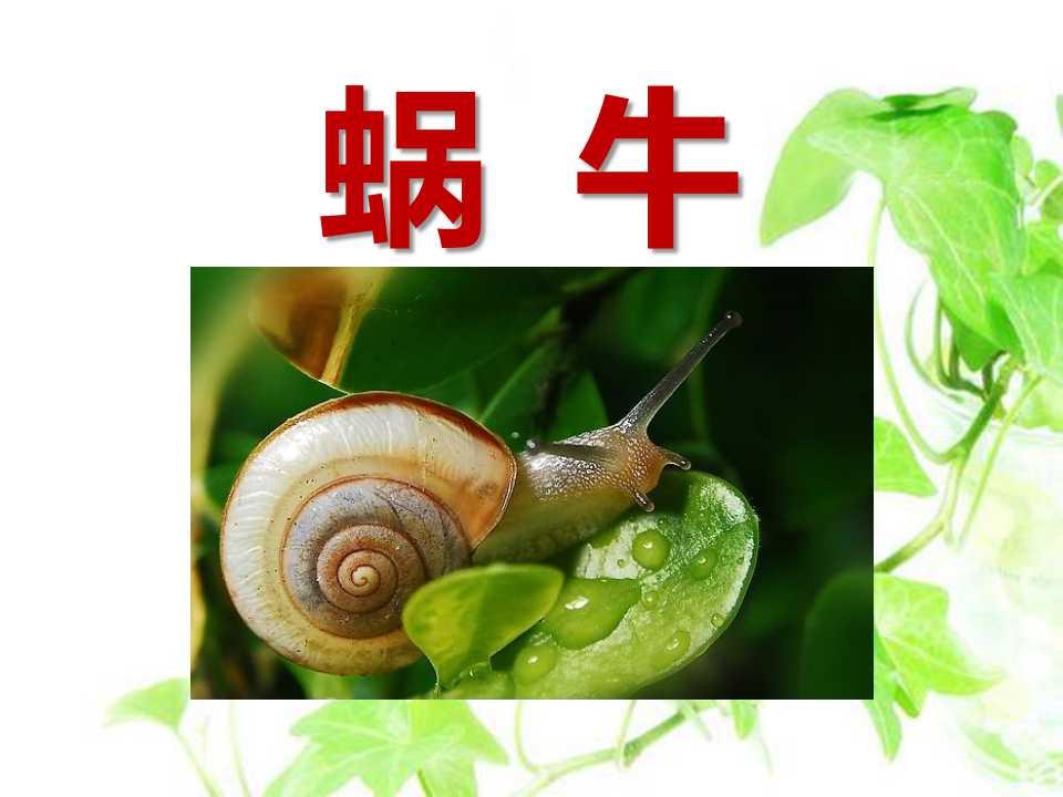 《蜗牛》动物PPT课件