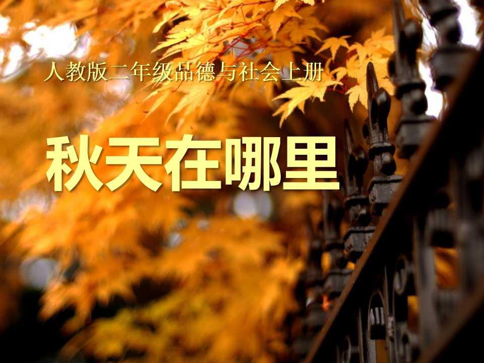 《秋天在哪里》金色的秋天PPT课件5