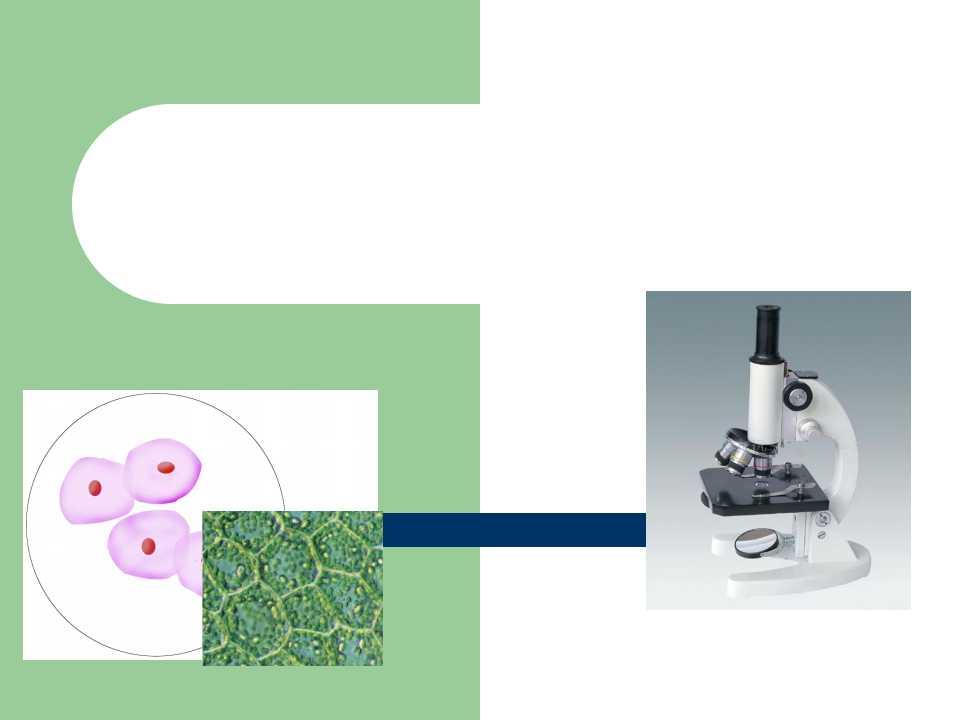 《练习使用显微镜》细胞是生命活动的基本单位PPT课件6