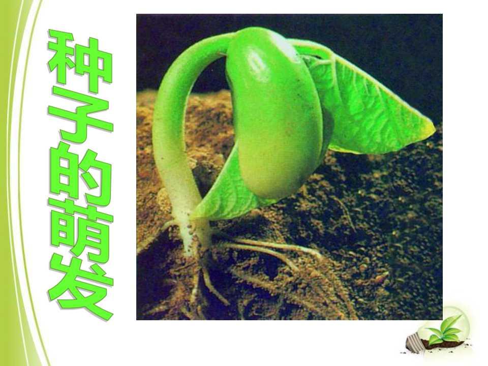 《种子的萌发》被子植物的一生PPT课件8