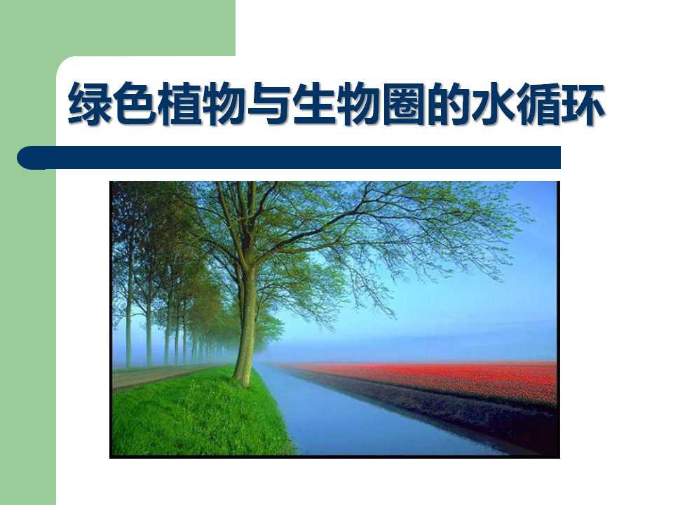 《绿色植物与生物圈的水循环》PPT课件5