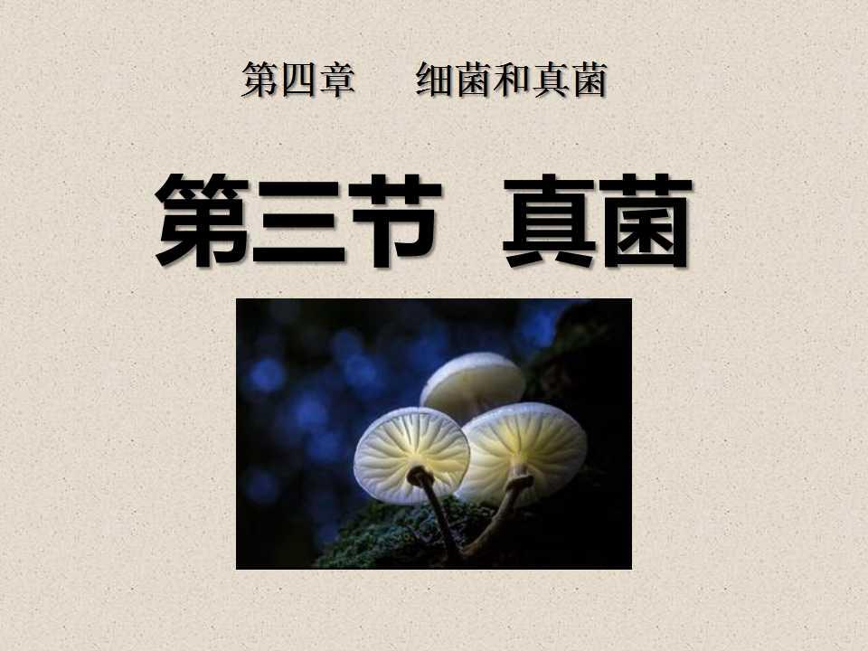 《真菌》细菌和真菌PPT课件5