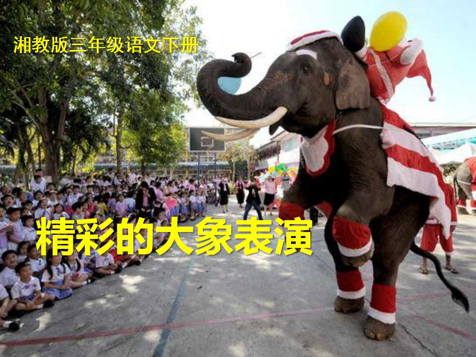 《精彩的大象表演》PPT课件2