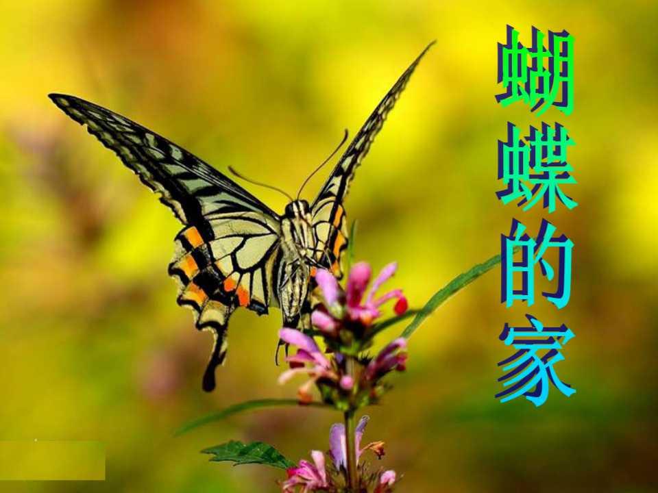 《蝴蝶的家》PPT课件5
