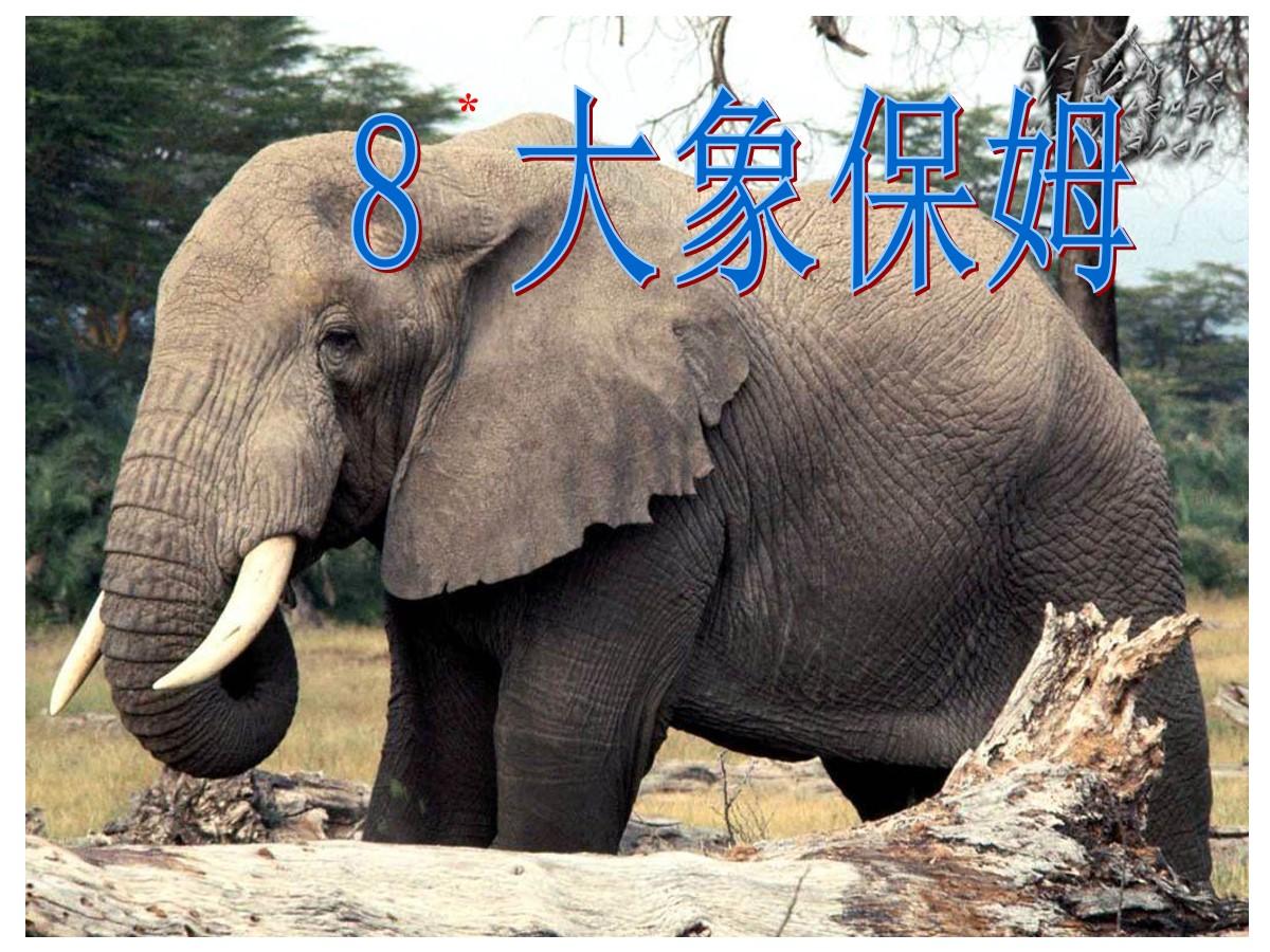 《大象保姆》PPT课件