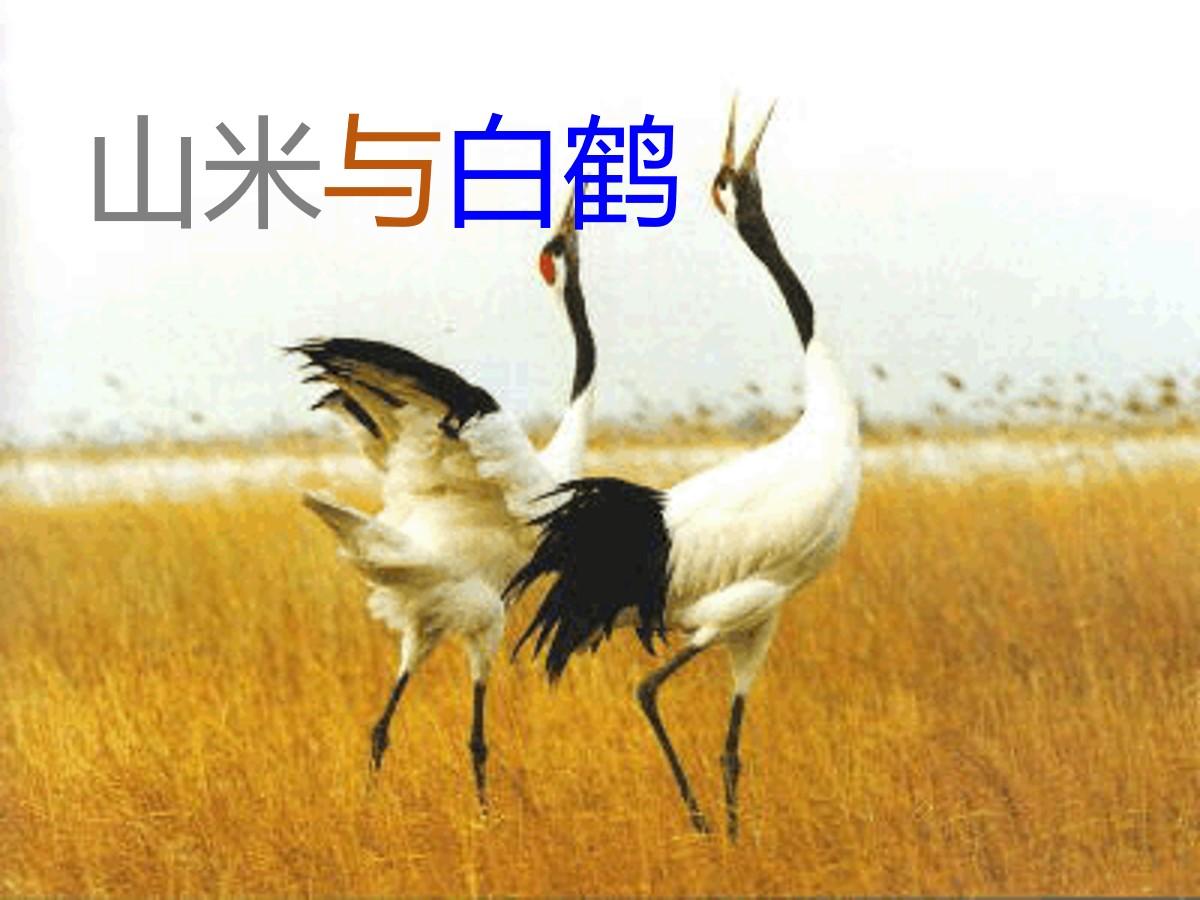 《山米与白鹤》PPT课件2