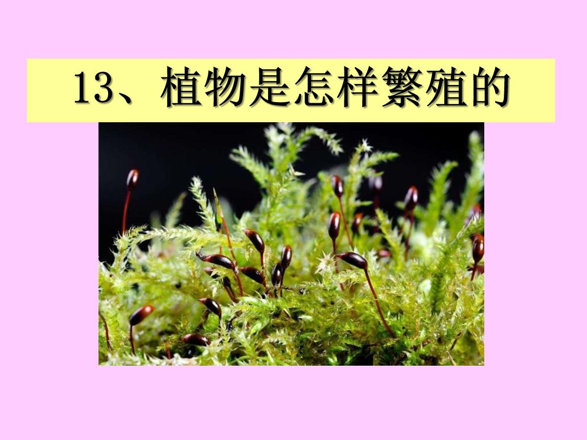 《植物是怎样繁殖的》植物的生命系统PPT课件3