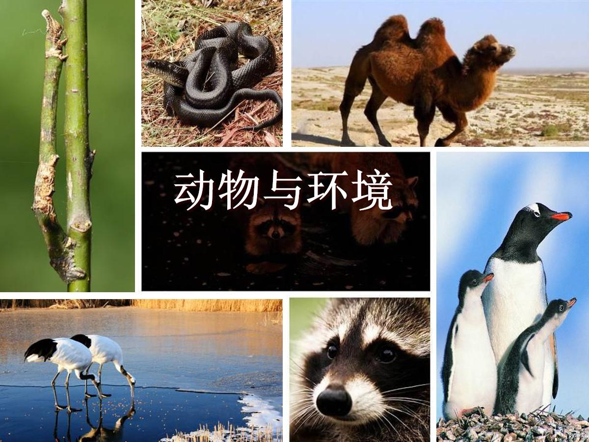《动物与环境》生物与环境PPT课件