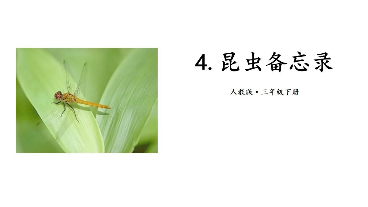 《昆虫备忘录》PPT(第一课时)