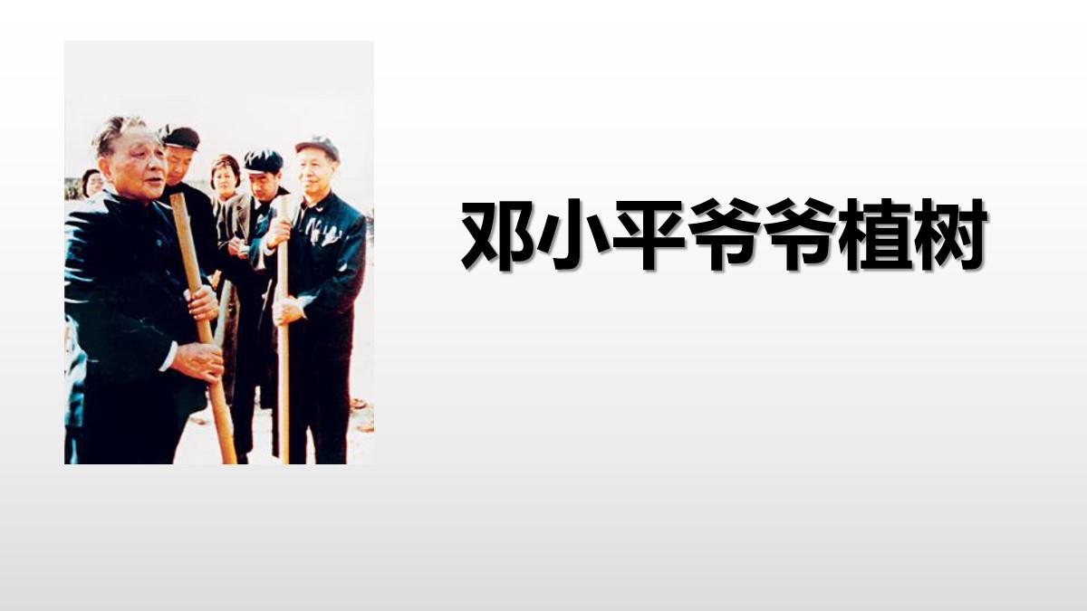 《邓小平爷爷植树》PPT免费课件
