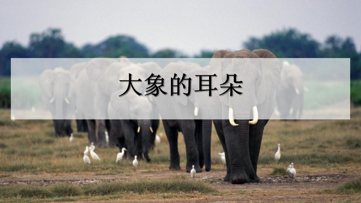 《大象的耳朵》PPT课件