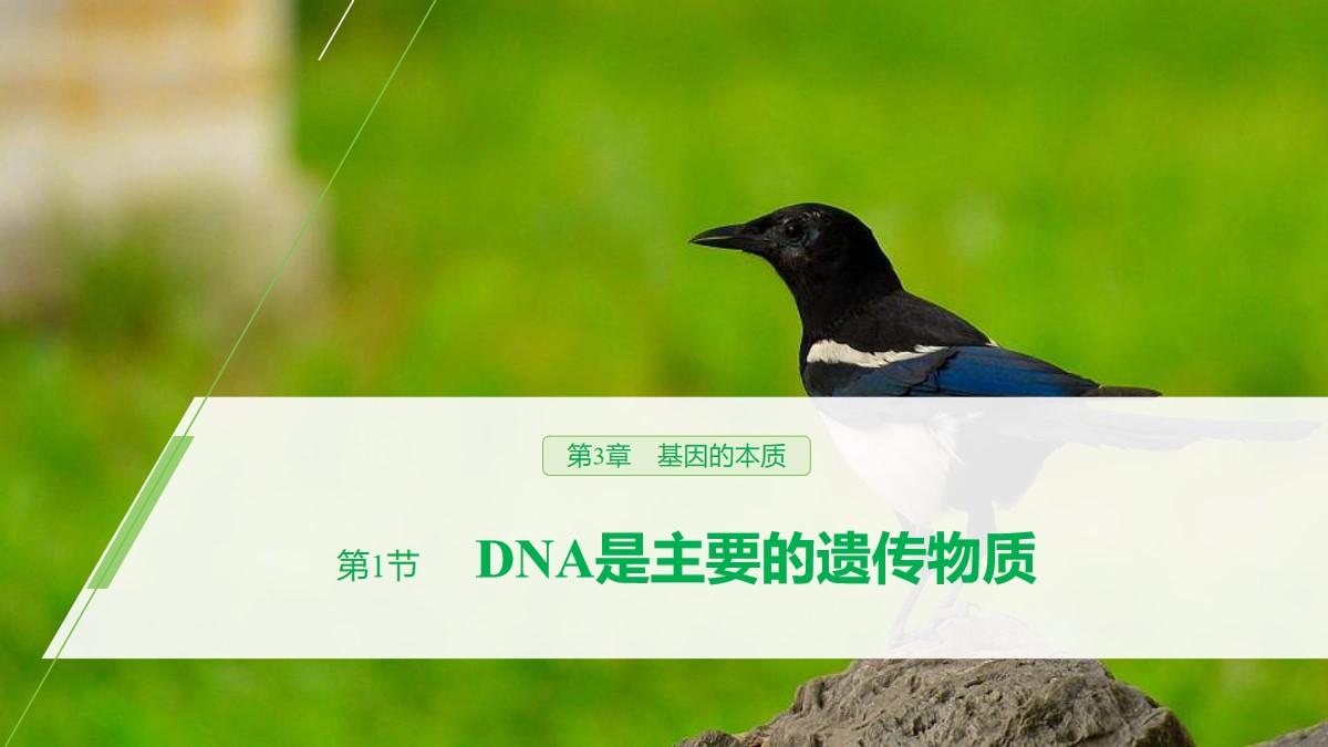 《DNA是主要的遗传物质》基因的本质PPT