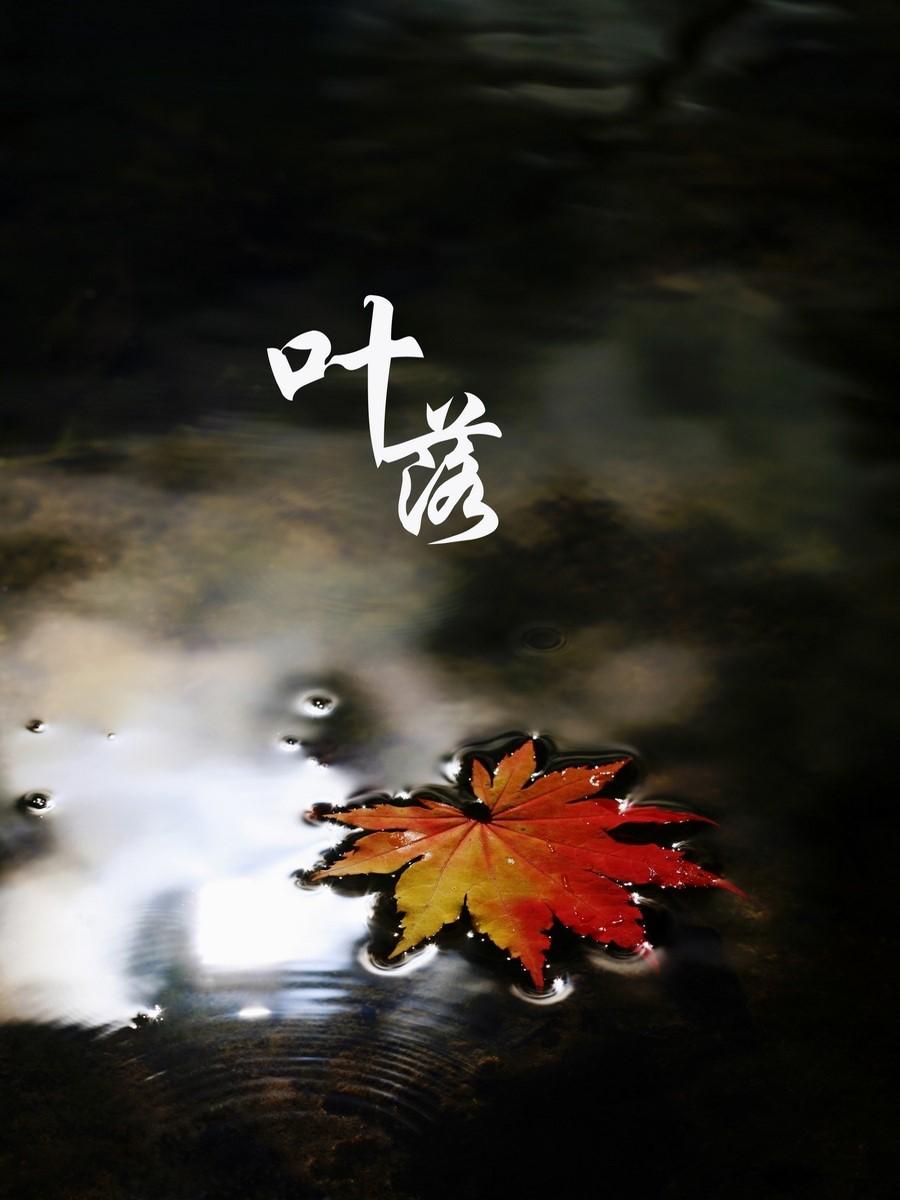 叶落幻灯片背景图片五张 秋天、秋季PPT