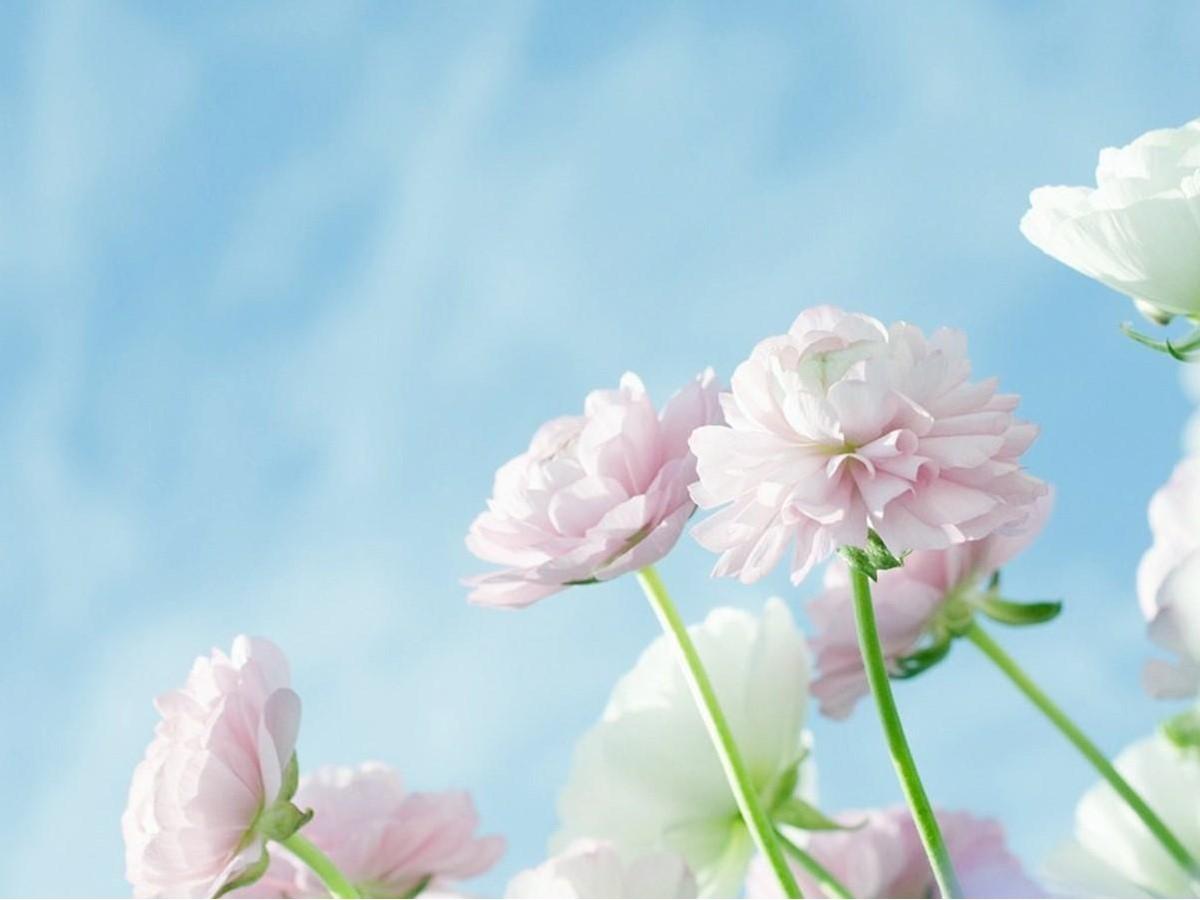 三张淡雅花卉PPT背景图片