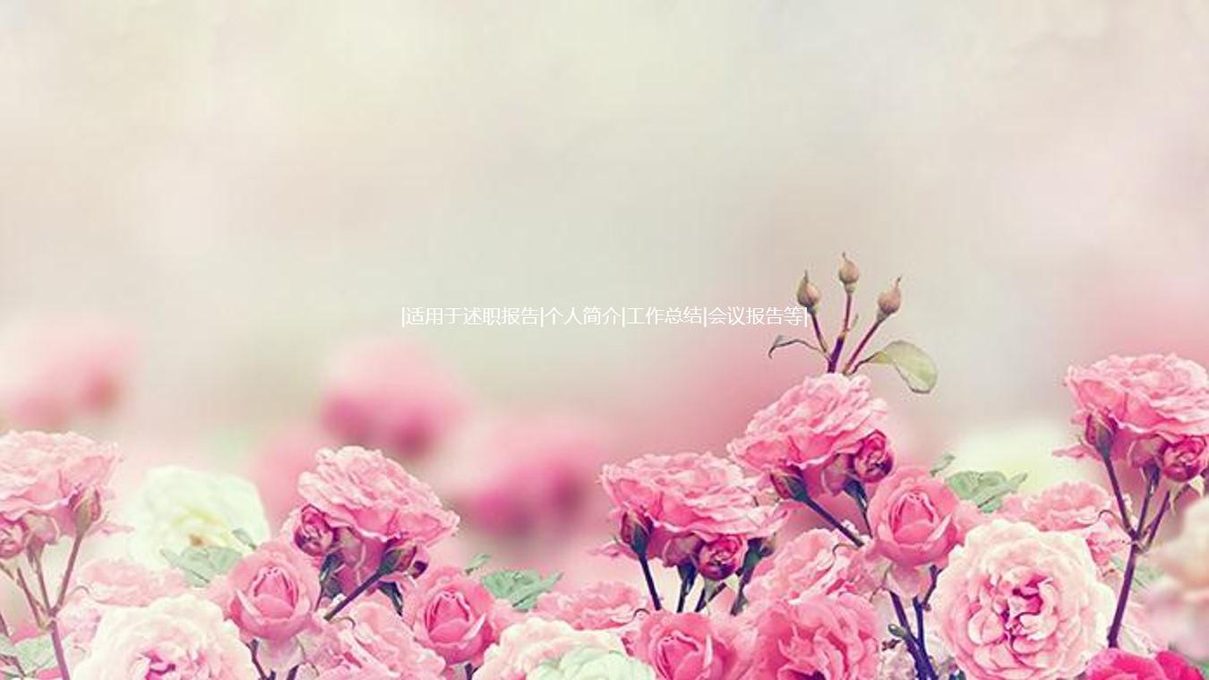 粉色蔷薇花背景的韩国PPT模板