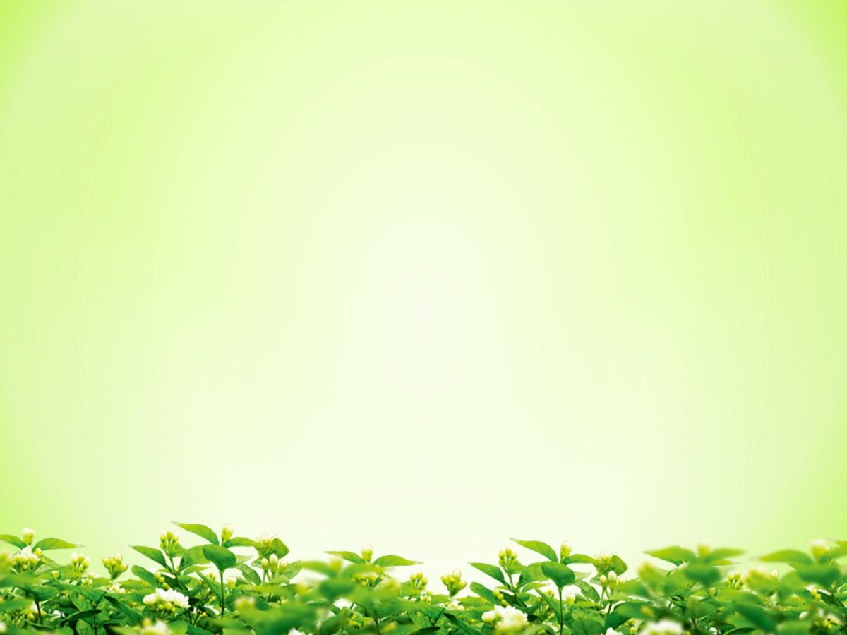 淡雅绿色背景的叶子绿叶幻灯片背景图片