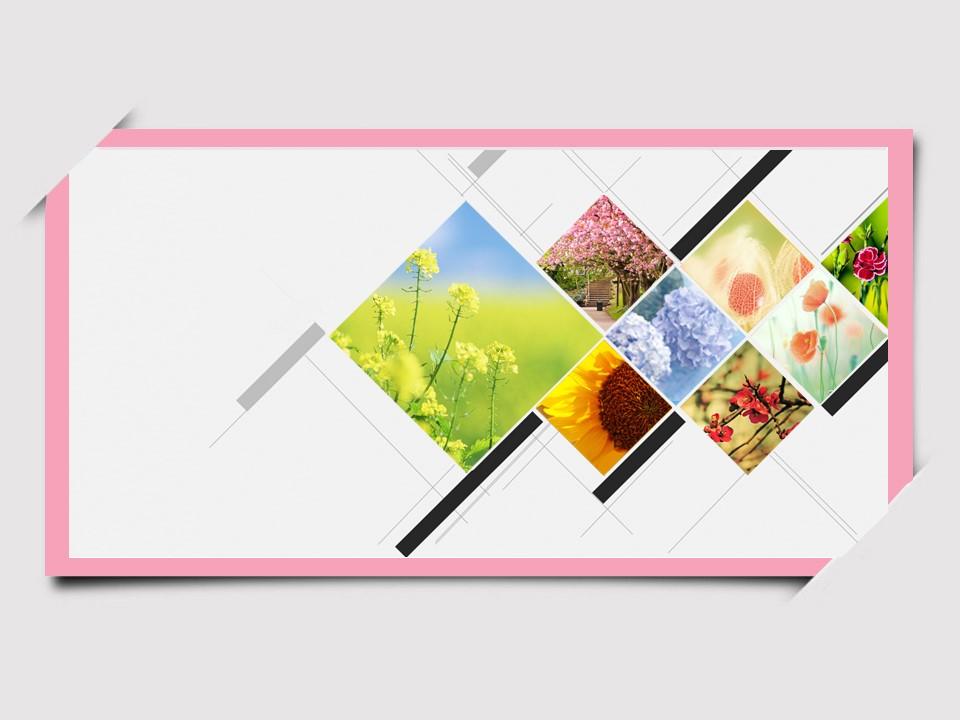 一组精美的鲜花植物背景幻灯片模板