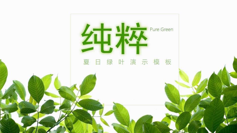 清新绿色叶子背景的夏日主题PPT模板