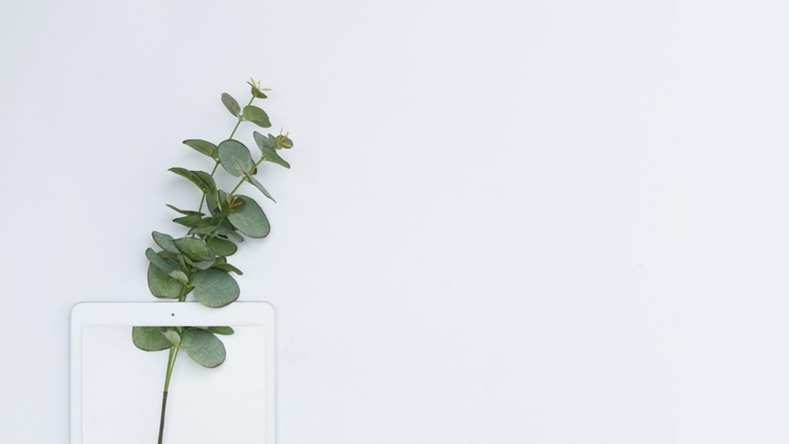极简小清新绿色植物背景PPT模板