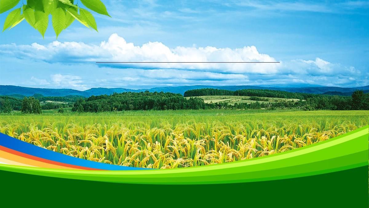 绿色稻田背景的农业相关PPT模板 农业招商引资PPT