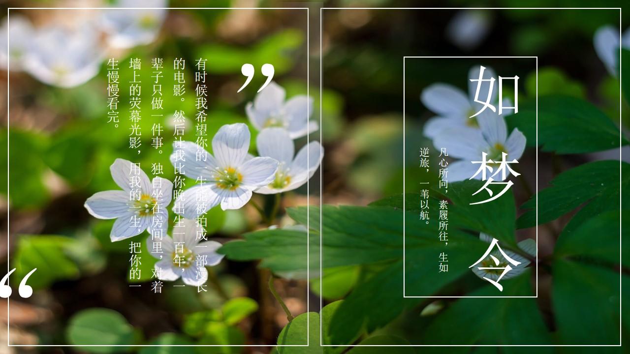 清新绿色植物图片排版PPT模板 杂志风PPT