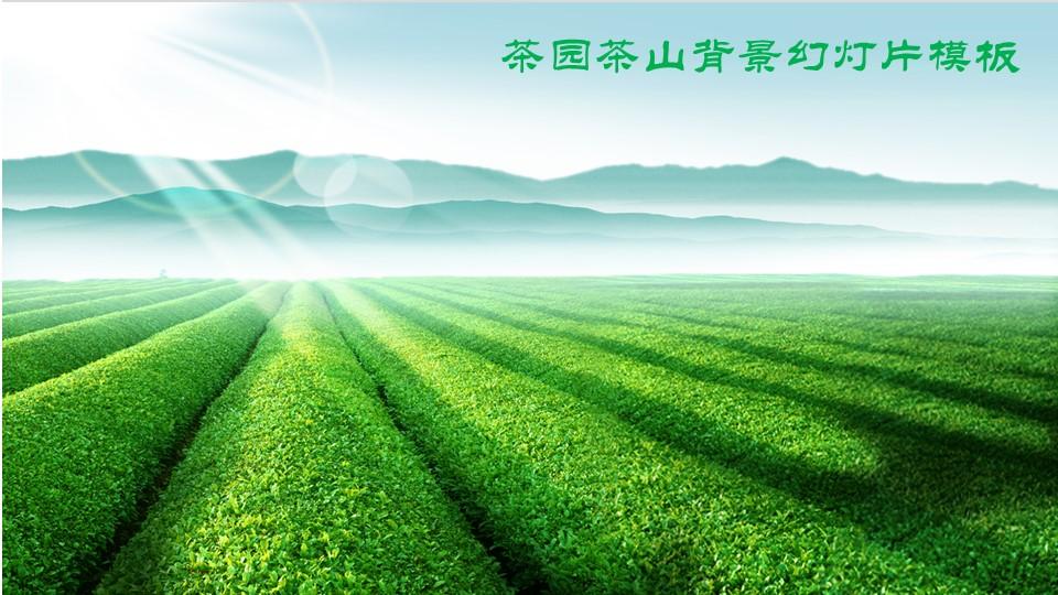 绿色茶山茶庄茶园PPT模板 茶叶PowerPoint背景图片