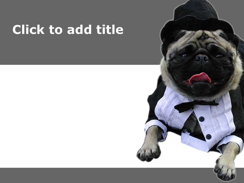可爱小狗艺术PPT模板